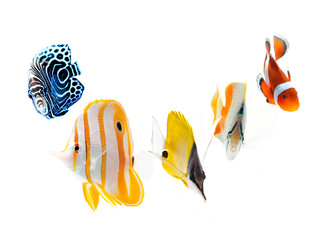reef fish, marine fish isolated on white background