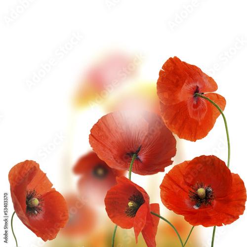 Fridge magnet kwiaty