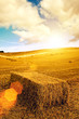 sunflare haystack