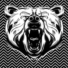 Niedźwiedź twarz