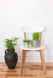 White wooden chair with green plants