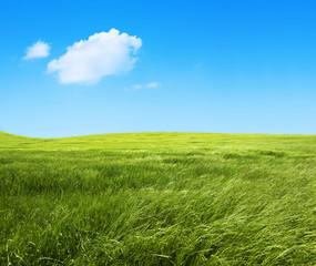 paisaje de campos de hierba verde.Fondo de naturaleza
