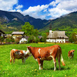Alpine scenery - green meadows