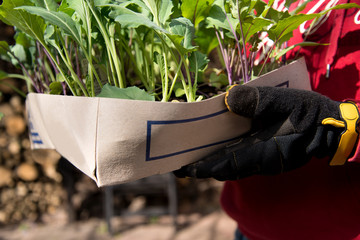 Garten *** Kohlrabi anpflanzen