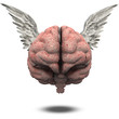 Winged Brain