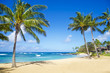Palm trees on the sandy beach in Hawaii - 53431750