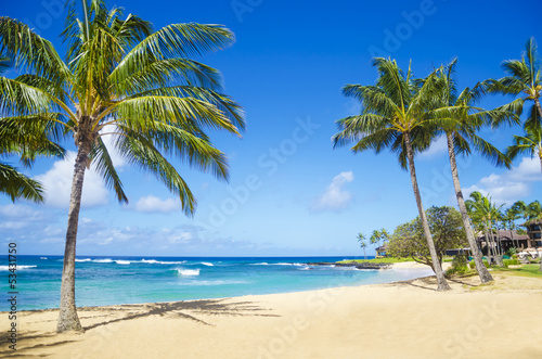Fotobehang Strand Palm trees on the sandy beach in Hawaii