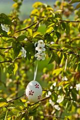 Osterei zwischen Kirschblüten