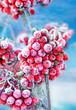 canvas print picture - Frozen rowan berries
