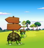 A turtle near the empty wooden arrow signboards