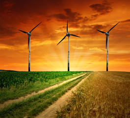 Field way with wind turbines