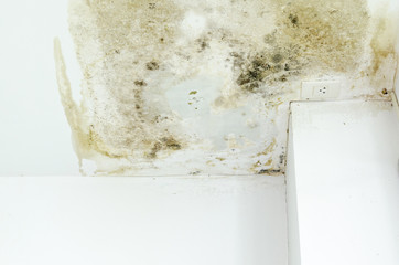 Fungus Infection on wall