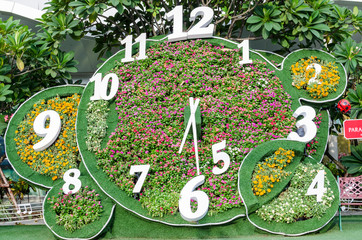 time flower
