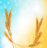 vector background with gold ears of wheat and sun rays