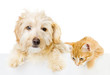Cat and Dog above white banner. isolated on white background