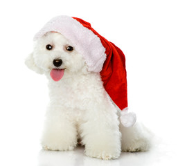 cute puppy dog in red christmas Santa hat, isolated on white