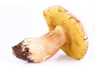 Mushroom (Boletus edulis) isolated