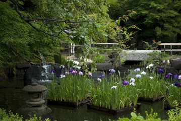 Garden at Hase dera Kannon temple, Kamakura, Japan