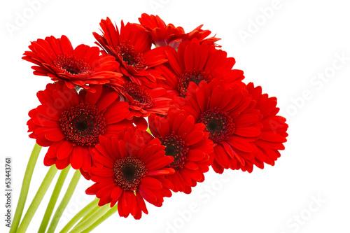Spoed canvasdoek 2cm dik Gerbera gerbera flowers