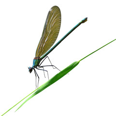 dragonfly sits on a blade of grass