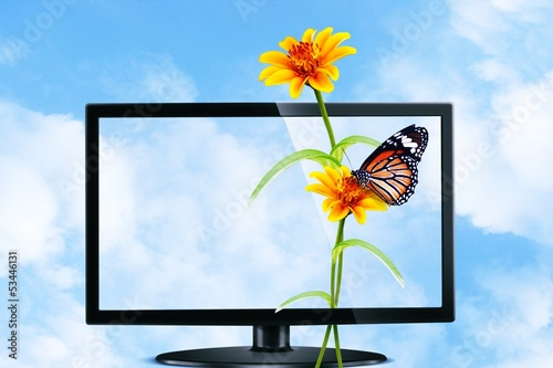 Butterfly and flower on Television