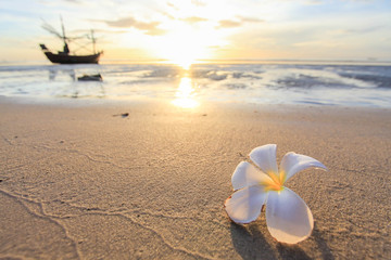 the beautiful flowers on beach background