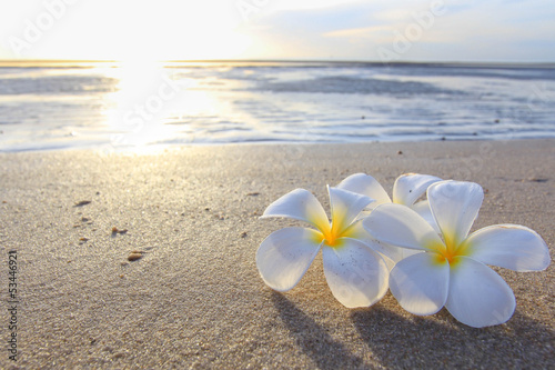 Foto op Plexiglas Frangipani the beautiful flowers on beach background.JPG