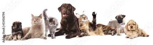 Group of cats and dogs in front of white background - 53456794