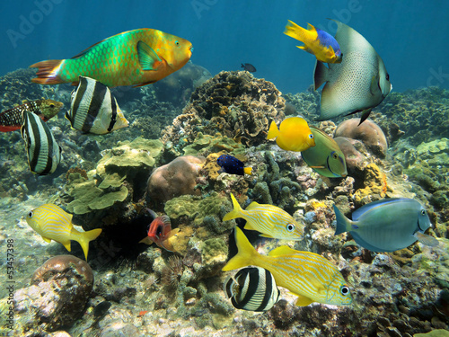 Leinwanddruck Bild Healthy coral reef with colorful fish