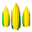 3d rendered Corns