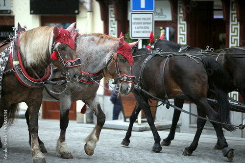 Two teams of horses on street in Czech Republic