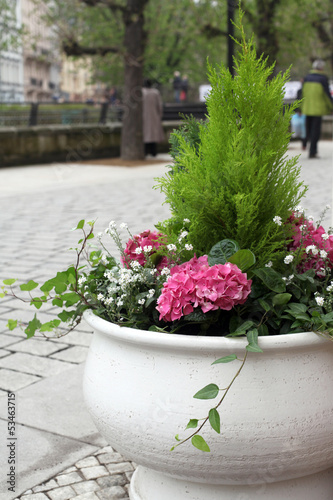 Cachepot with blooming hydrangea on street