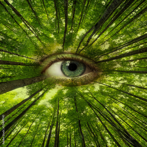 forest looking on us - ecology concept