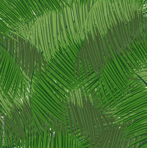 Dense tropical forest