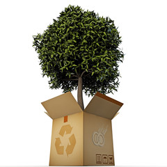 green tree in a box