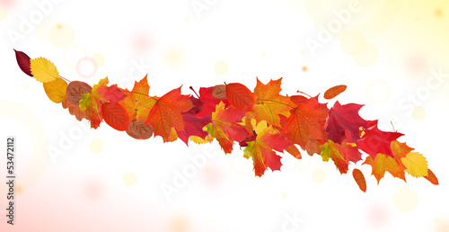 autumn leaves curl on light background
