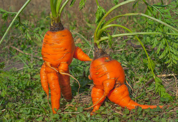 Unusual carrot 7