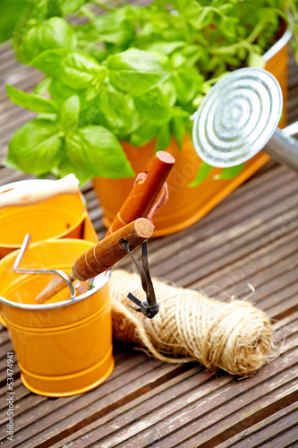 Fresh herbs with gardening tools