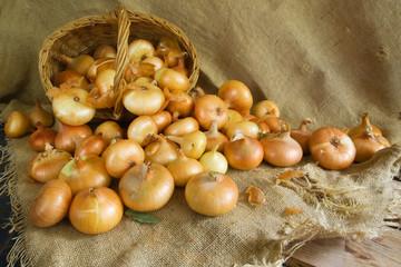 onion in basket