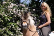 Blonde Reiterin auf Fjordpferd