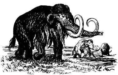Mammoths in the field