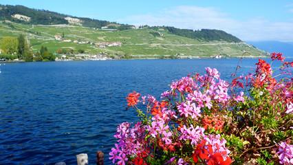 Coteaux de Lausanne épesses Lac Léman