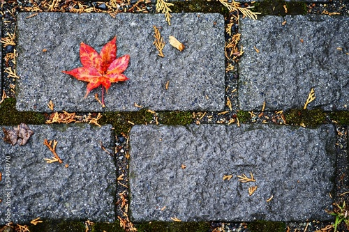 Fall Leaf on Brick Ground