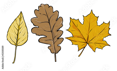 vector yellow leaves - poplar, oak, maple