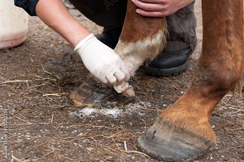 Papiers peints Equestre Clean a wound