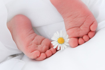 Babyfüßchen Gänseblümchen 6