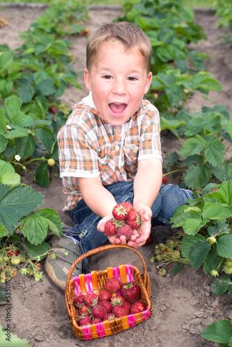 Kleiner Junge sammelt Erdbeeren
