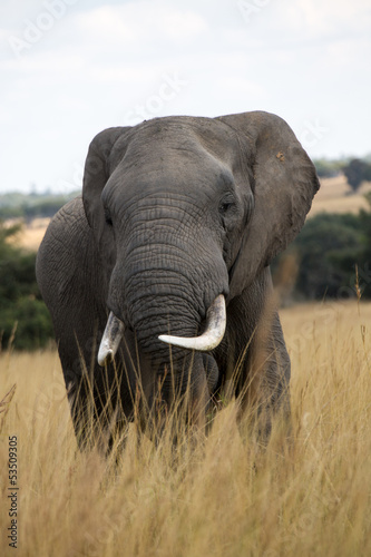 Elephants in Zimbabwe, Africa