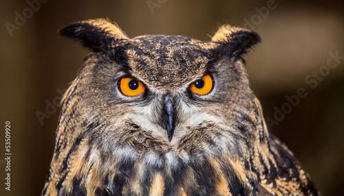 Spoed canvasdoek 2cm dik Uil Eurasian Eagle Owl