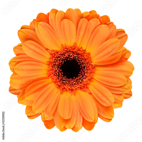 Foto op Canvas Madeliefjes Orange Gerbera Flower Isolated on White